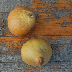 johnson family dental pears